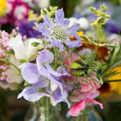 wpid11365-Cut-Summer-Flowers-GORB041-nicola-stocken.jpg