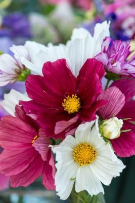 wpid11367-Cut-Summer-Flowers-GORB043-nicola-stocken.jpg
