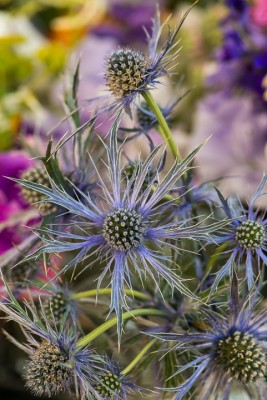 wpid11369-Cut-Summer-Flowers-GORB044-nicola-stocken.jpg