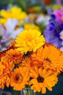 wpid11371-Cut-Summer-Flowers-GORB045-nicola-stocken.jpg