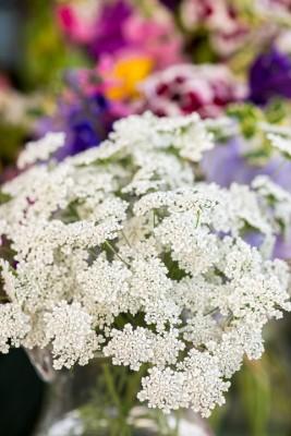 wpid11373-Cut-Summer-Flowers-GORB047-nicola-stocken.jpg