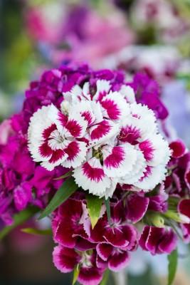 wpid11375-Cut-Summer-Flowers-GORB048-nicola-stocken.jpg