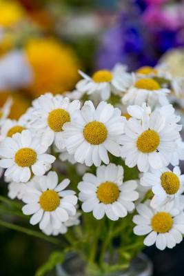 wpid11377-Cut-Summer-Flowers-GORB049-nicola-stocken.jpg