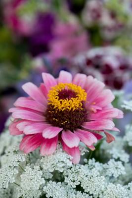 wpid11379-Cut-Summer-Flowers-GORB050-nicola-stocken.jpg