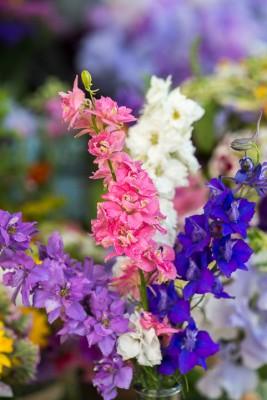wpid11381-Cut-Summer-Flowers-GORB051-nicola-stocken.jpg