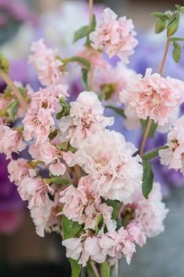 wpid11383-Cut-Summer-Flowers-GORB052-nicola-stocken.jpg