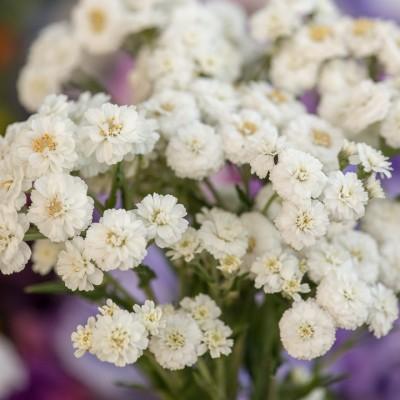wpid11385-Cut-Summer-Flowers-GORB053-nicola-stocken.jpg