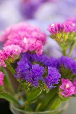 wpid11387-Cut-Summer-Flowers-GORB054-nicola-stocken.jpg