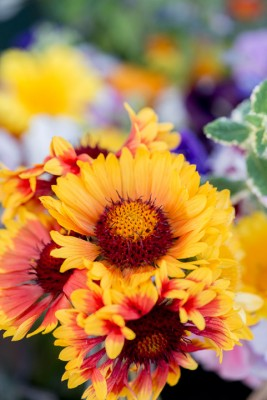 wpid11389-Cut-Summer-Flowers-GORB056-nicola-stocken.jpg