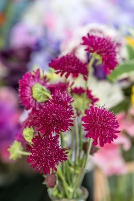 wpid11391-Cut-Summer-Flowers-GORB057-nicola-stocken.jpg