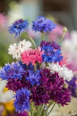 wpid11393-Cut-Summer-Flowers-GORB058-nicola-stocken.jpg