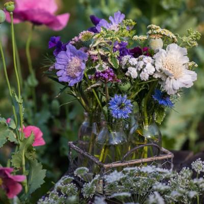wpid11403-Cut-Summer-Flowers-GORB078-nicola-stocken.jpg