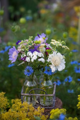 wpid11405-Cut-Summer-Flowers-GORB079-nicola-stocken.jpg