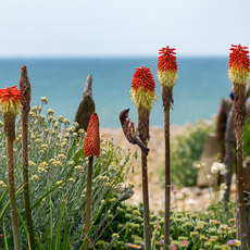 Thumbnail image for A Seaside Garden in June