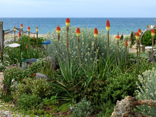 wpid11425-A-Seaside-Garden-in-June-GSOL018-nicola-stocken.jpg