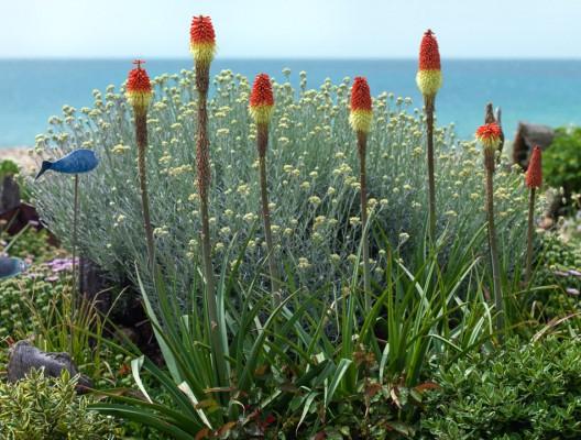 wpid11427-A-Seaside-Garden-in-June-GSOL020-nicola-stocken.jpg