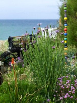 wpid11439-A-Seaside-Garden-in-June-GSOL016-nicola-stocken.jpg
