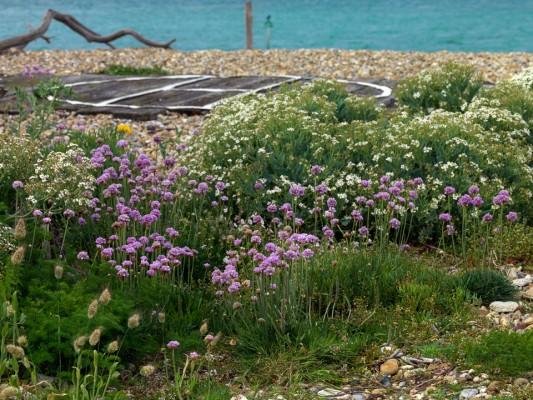wpid11441-A-Seaside-Garden-in-June-GSOL022-nicola-stocken.jpg
