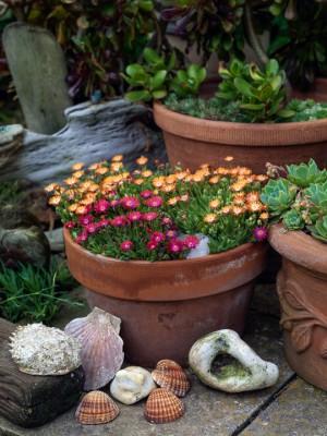 wpid11461-A-Seaside-Garden-in-June-GSOL038-nicola-stocken.jpg