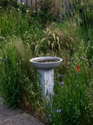 wpid11471-A-Seaside-Garden-in-June-GSOL045-nicola-stocken.jpg