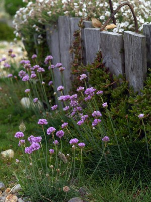 wpid11489-A-Seaside-Garden-in-June-PARM006-nicola-stocken.jpg