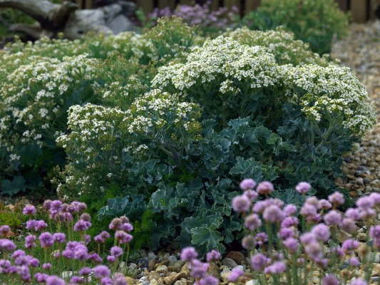 wpid11491-A-Seaside-Garden-in-June-PCRA001-nicola-stocken.jpg