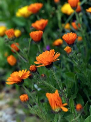 wpid11514-A-Seaside-Garden-in-June-XCAL010-nicola-stocken.jpg
