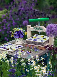 Thumbnail image for Flower Pressing