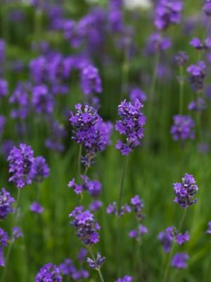 wpid11602-Flower-Pressing-SLAV022-nicola-stocken.jpg