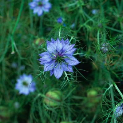 wpid11606-Flower-Pressing-XNIG003-nicola-stocken.jpg