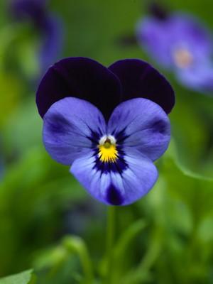 wpid11608-Flower-Pressing-XVIO011-nicola-stocken.jpg
