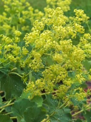 wpid11610-Flower-Pressing-PALC012-nicola-stocken.jpg