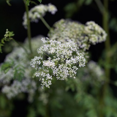 wpid11612-Flower-Pressing-PANT010-nicola-stocken.jpg