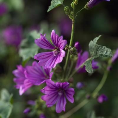 wpid11618-Flower-Pressing-PMAL004-nicola-stocken.jpg