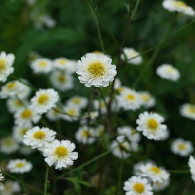 wpid11624-Flower-Pressing-PTAN002-nicola-stocken.jpg