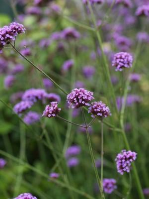 wpid11626-Flower-Pressing-PVER054-nicola-stocken.jpg