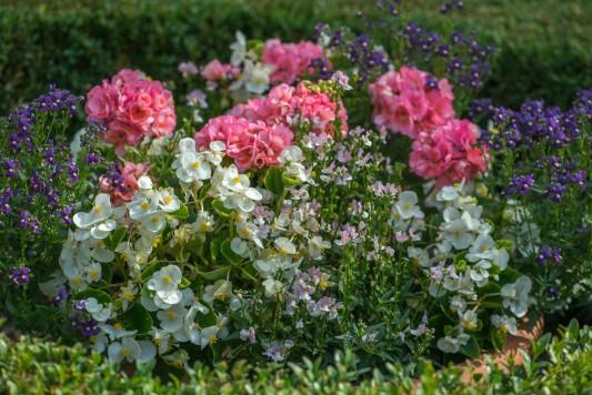 wpid11780-Valley-Road-Garden-in-June-GVAE025-nicola-stocken.jpg