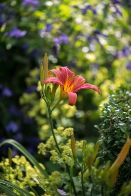 wpid11790-Valley-Road-Garden-in-June-GVAE030-nicola-stocken.jpg