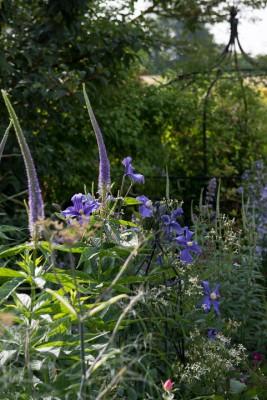 wpid11792-Valley-Road-Garden-in-June-GVAE031-nicola-stocken.jpg