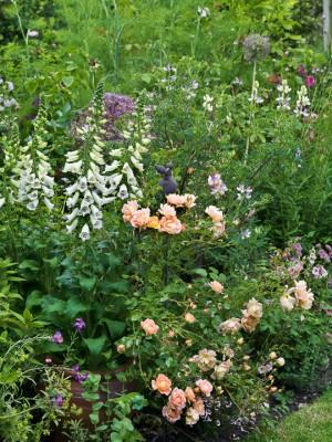 wpid11964-The-Crest-Garden-in-June-GTHC015-nicola-stocken.jpg