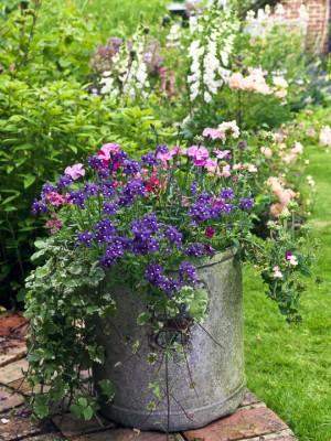 wpid11968-The-Crest-Garden-in-June-GTHC017-nicola-stocken.jpg