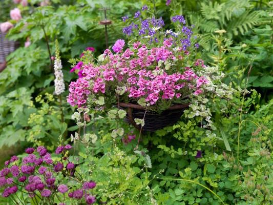wpid11972-The-Crest-Garden-in-June-GTHC019-nicola-stocken.jpg