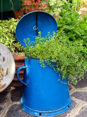 wpid11992-The-Crest-Garden-in-June-GTHC029-nicola-stocken.jpg