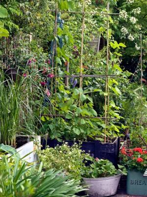 wpid12006-The-Crest-Garden-in-June-GTHC036-nicola-stocken.jpg