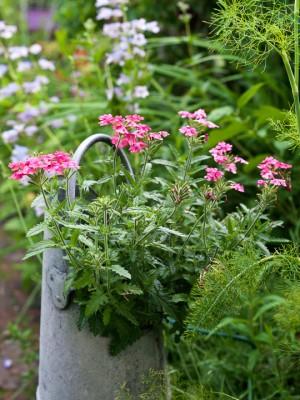 wpid12012-The-Crest-Garden-in-June-GTHC039-nicola-stocken.jpg