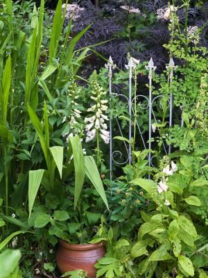 wpid12020-The-Crest-Garden-in-June-GTHC043-nicola-stocken.jpg