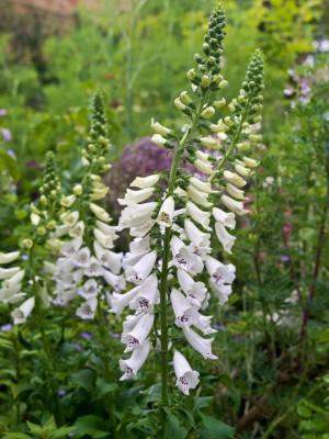 wpid12028-The-Crest-Garden-in-June-PDIG015-nicola-stocken.jpg