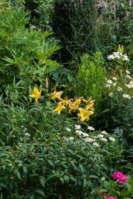 wpid12089-Woodbines-Avenue-Garden-in-August-GWDB026-nicola-stocken.jpg