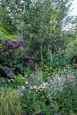wpid12093-Woodbines-Avenue-Garden-in-August-GWDB028-nicola-stocken.jpg