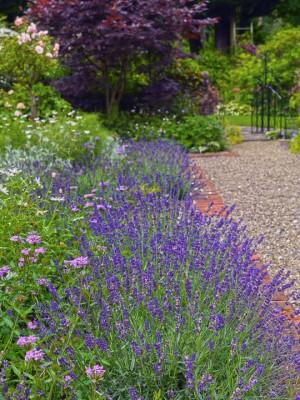 wpid9935-Up-The-Garden-Path-GGLO099-nicola-stocken.jpg
